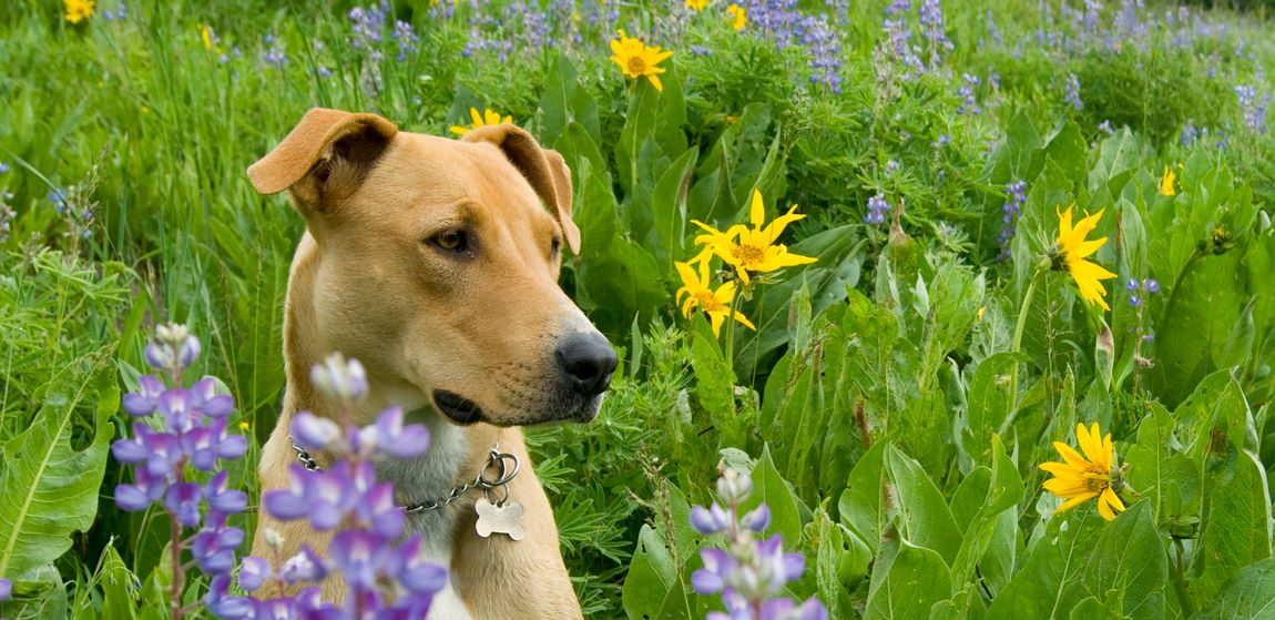 Adorable dog sitting in a field of flowers